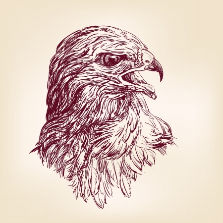 hawk - vector illustration Stock Vector - 16793441