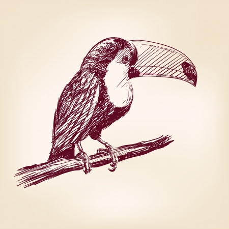 toucan hand drawn photo