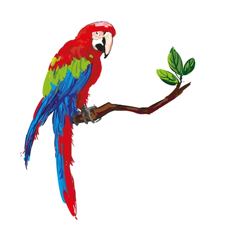 colorful parrot  Stock Vector - 16846529