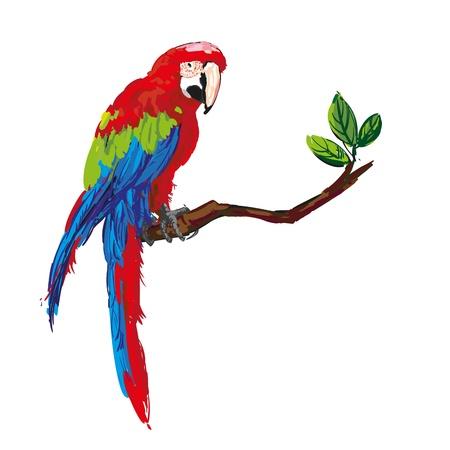 parrot tail: colorful parrot
