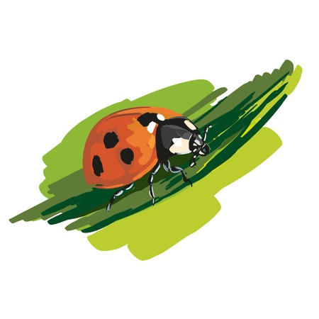 ladybird Stock Vector - 16846534