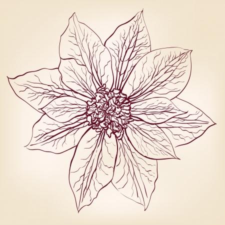 Beautiful Flowers  vector illustration Stock Vector - 16826866