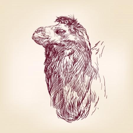 camel illustration Stock Vector - 17335570