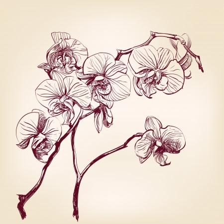 bloemen orchidee hand getrokken