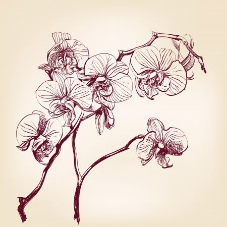 floral orchid hand drawn