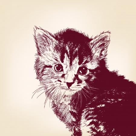 silueta de gato: gato ilustraci�n vectorial Vectores