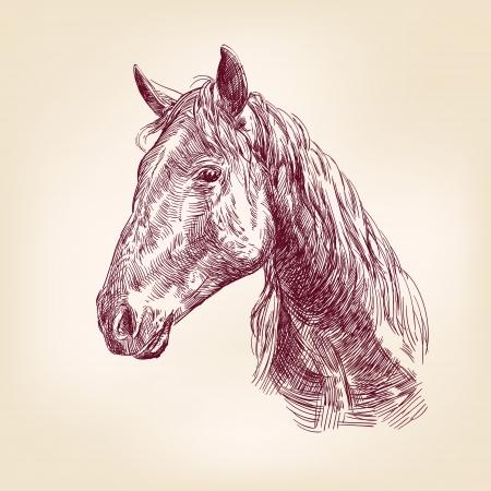horse drawn: horse llustration