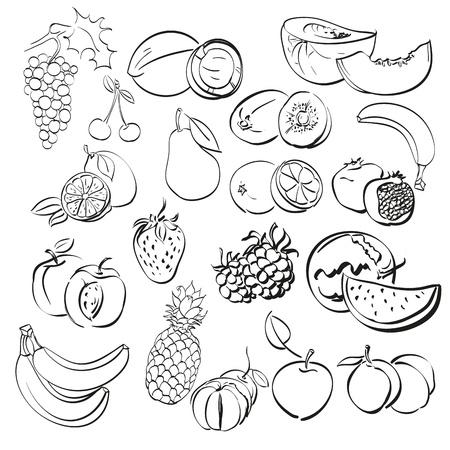 rambutan: different fruits set illustration Illustration