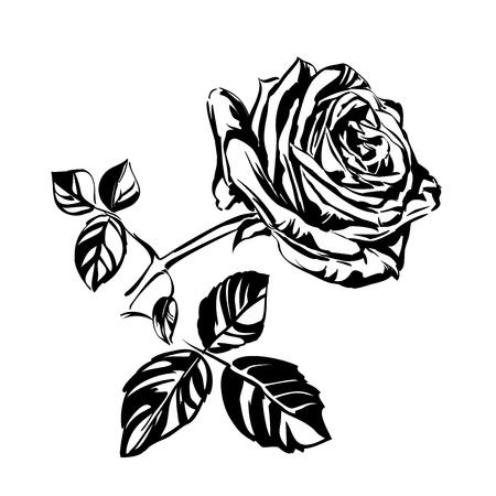 hand drawn roses