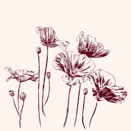 poppies: poppies flowers illustration