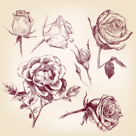 hand drawn rose: hand drawn roses set Stock Photo