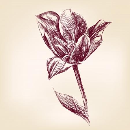 hand drawn tulip Vector