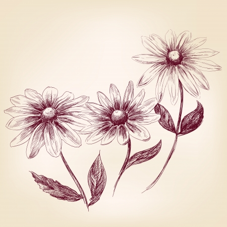 Beautiful Flower daisies  vector illustration Stock Vector - 19606841