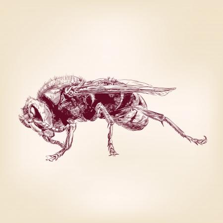 apocrita: bee insect hornet illustration