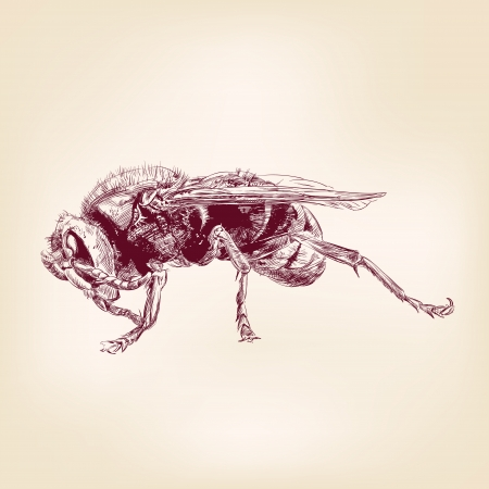 avispa: insectos abeja hornet ilustración