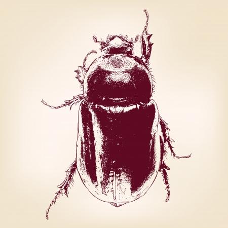 beetle scarab hand drawn vector llustration Illustration
