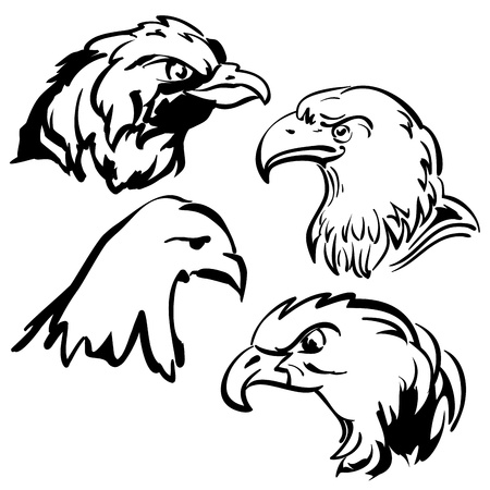 eagle  doodle sketch collection cartoon  illustration Vector