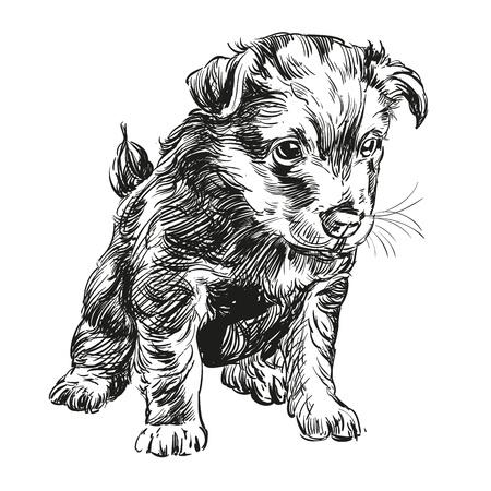 puppy dog hand drawn llustration realistic sketch