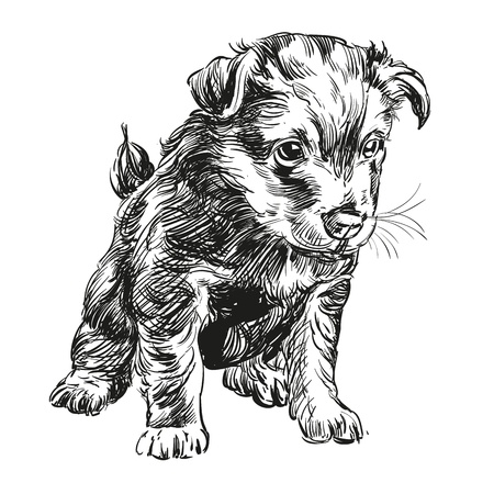 puppy dog hand drawn llustration realistic sketch Vector