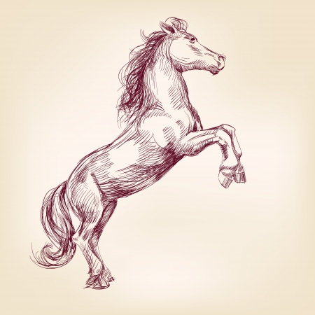 horse hand drawn llustration realistic sketch