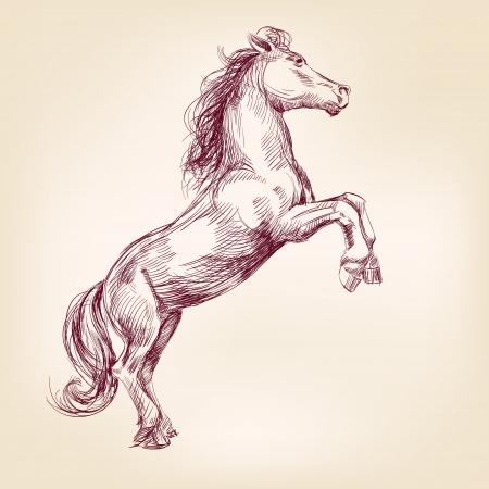 the arabian mare: horse hand drawn llustration realistic sketch