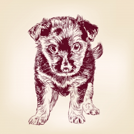 puppy dog hand drawn vector llustration realistic sketch Vector