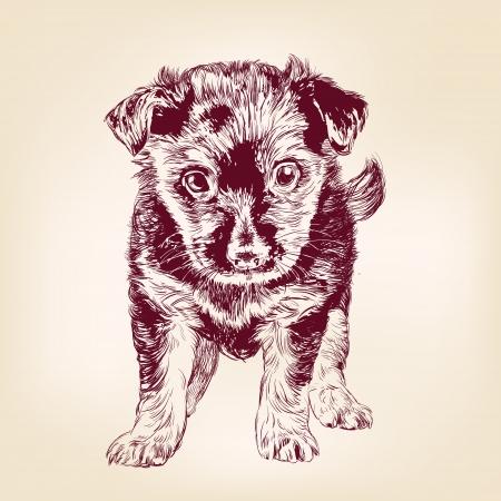 whelp: puppy dog hand drawn vector llustration realistic sketch Illustration