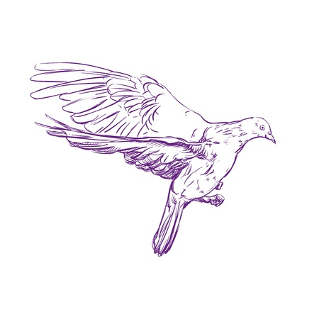 flying dove  hand drawn vector llustration realistic sketch