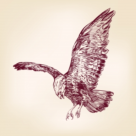 the air attack: Eagle - hand drawn vector llustration realistic sketch