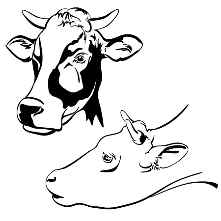 calas blancas: vaca de dibujos animados conjunto ilustración vectorial boceto