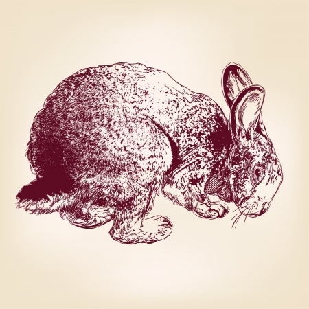 bunny rabbit: bunny hand drawn vector llustration realistic sketch