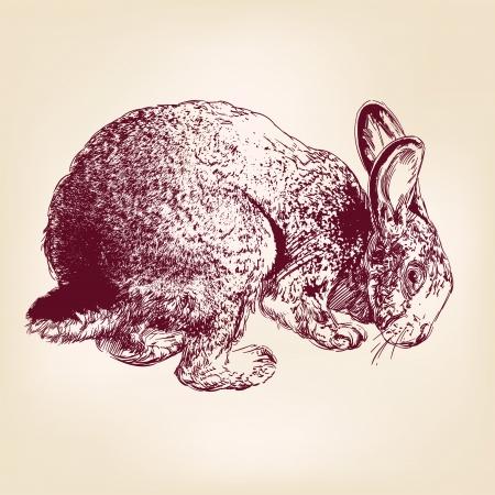 lapin blanc: lapin main vecteur llustration croquis tir� r�aliste