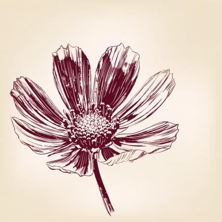 daisy flower: daisies hand drawn vector llustration realistic sketch
