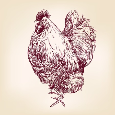 chicken vintage hand drawn vector illustration