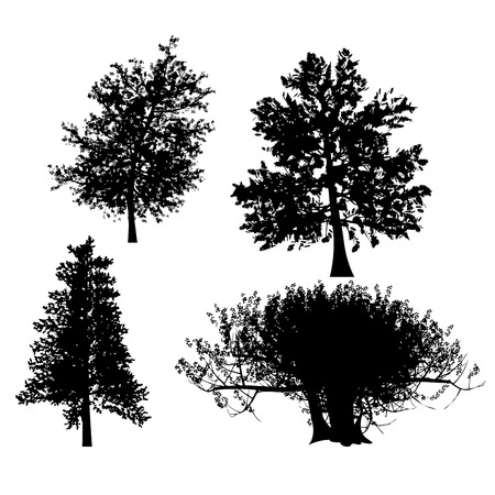 tree outline: drawing of the tree vector llustration