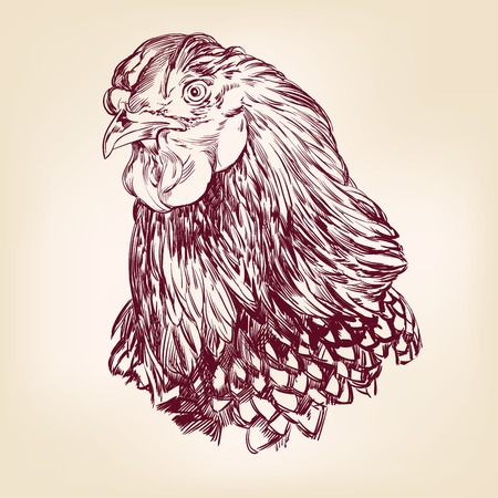 chicken vintage hand drawn vector illustration Vector