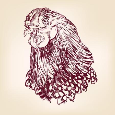 chicken vintage hand drawn vector illustration Vector