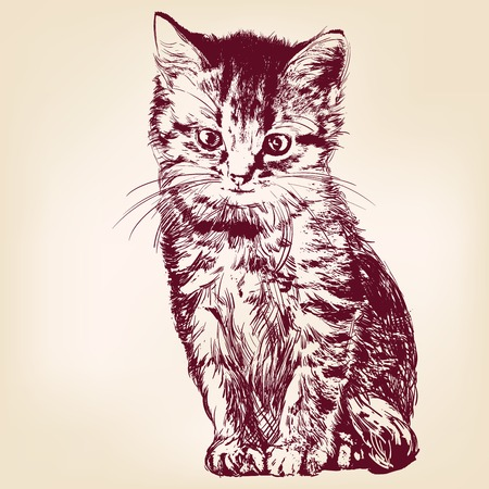 cat  - hand drawn vector llustration isolated Stok Fotoğraf - 27706391