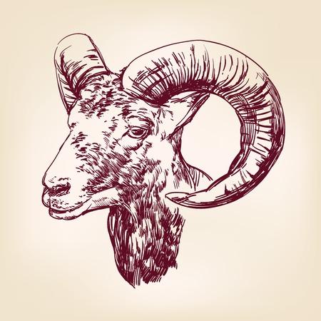 goat hand drawn vector llustration realistic sketch Vector
