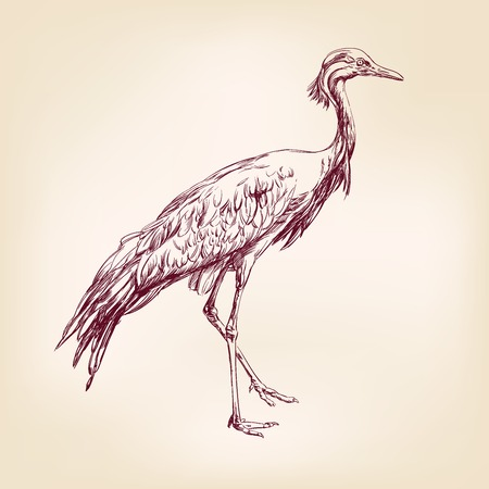 Japanese crane hand drawn vector llustration realistic sketch