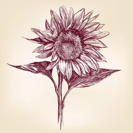 ひまわり手描き下ろしベクトル イラストレーション現実的なスケッチ
