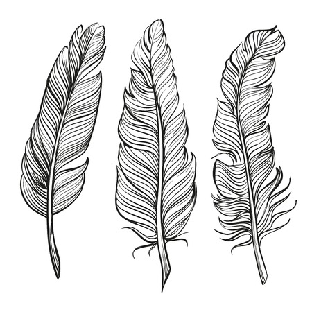 plumes mettre la main llustration dessinée esquisse réaliste