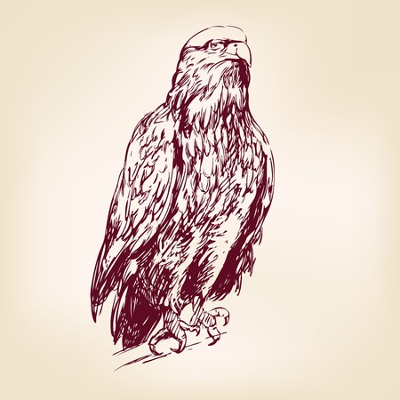 prey: Eagle - hand drawn  vector illustration  isolated Illustration