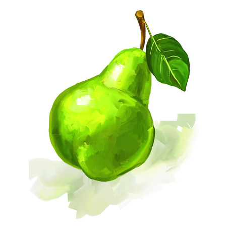 naturally: fruit pear  Vector illustration  hand drawn  painted watercolor Illustration