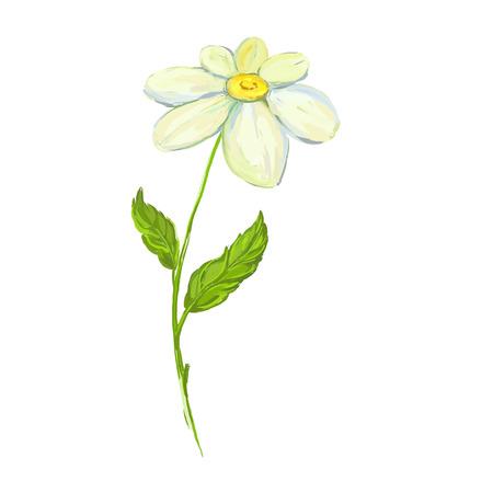 daisy vector: daisy Vector illustration  hand drawn  painted watercolor Illustration