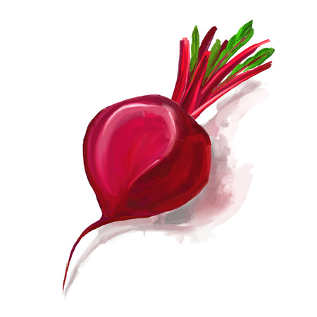beet root: beet vector illustration  hand drawn  painted watercolor