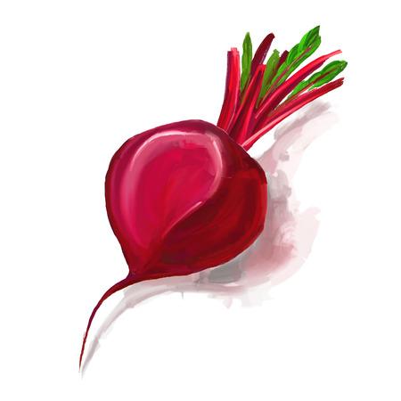 beet: beet vector illustration  hand drawn  painted watercolor