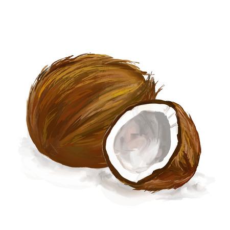 noix de coco: coco illustration tir�e par la main aquarelle peinte
