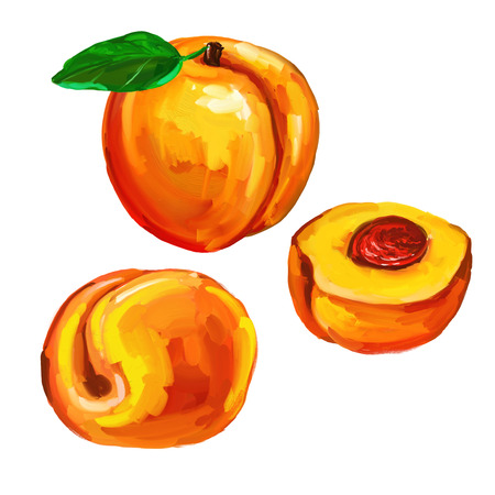 nectarine: peaches set  vector illustration  hand drawn  painted watercolor Illustration