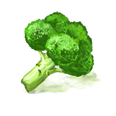 Broccoli vegetable vector illustration  hand drawn  painted watercolor